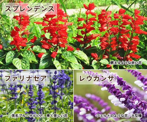 から 咲く まで 花 秋 春 新・花と緑の詳しい図鑑 春~初夏咲きの花(4)